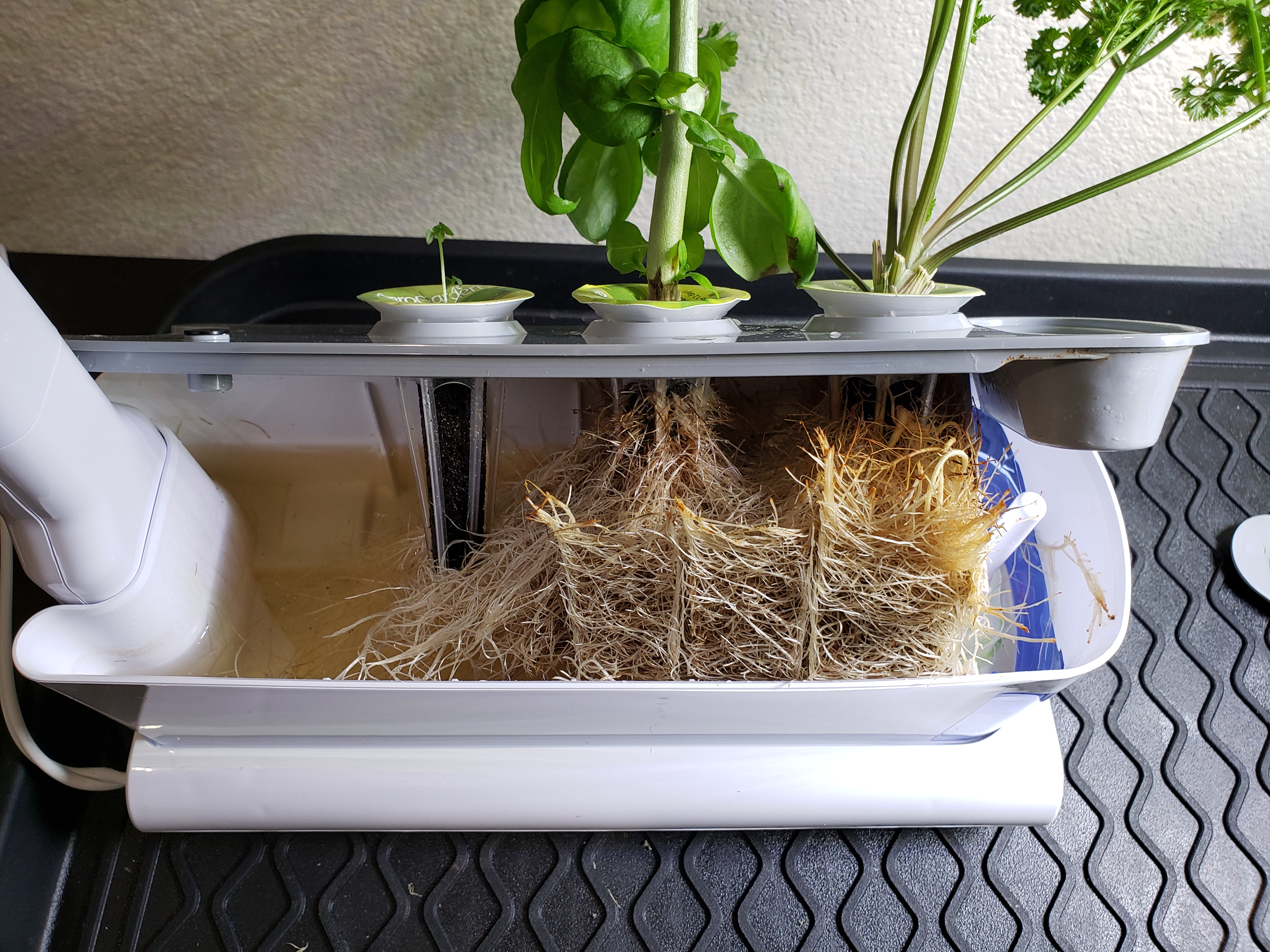 My Aerogarden System Cleaning and Root Trimming – My Small Space Gardening